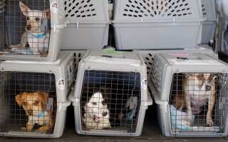 Правила перевозки домашних животных при поездках за границу