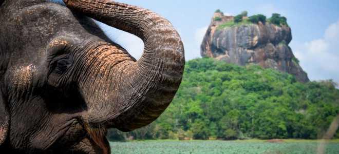 Въезд на Шри-Ланку для россиян: виза по прилету или электронное разрешение ETA