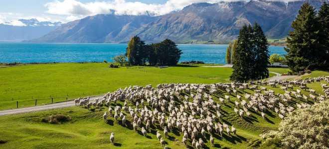 Как оформить визу в Новую Зеландию в 2020 году?