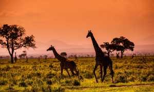 В ЮАР без визы: правила въезда и сроки пребывания в 2020 году