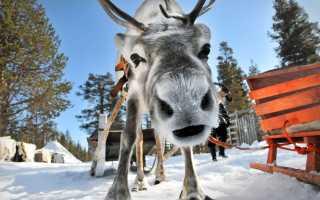 Как получить визу в Финляндию для россиян в 2020 году?