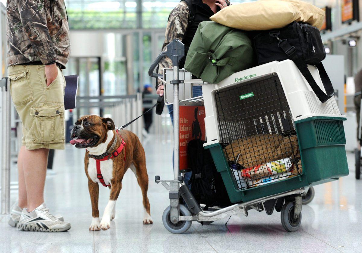 Собака с хозяином в аэропорту