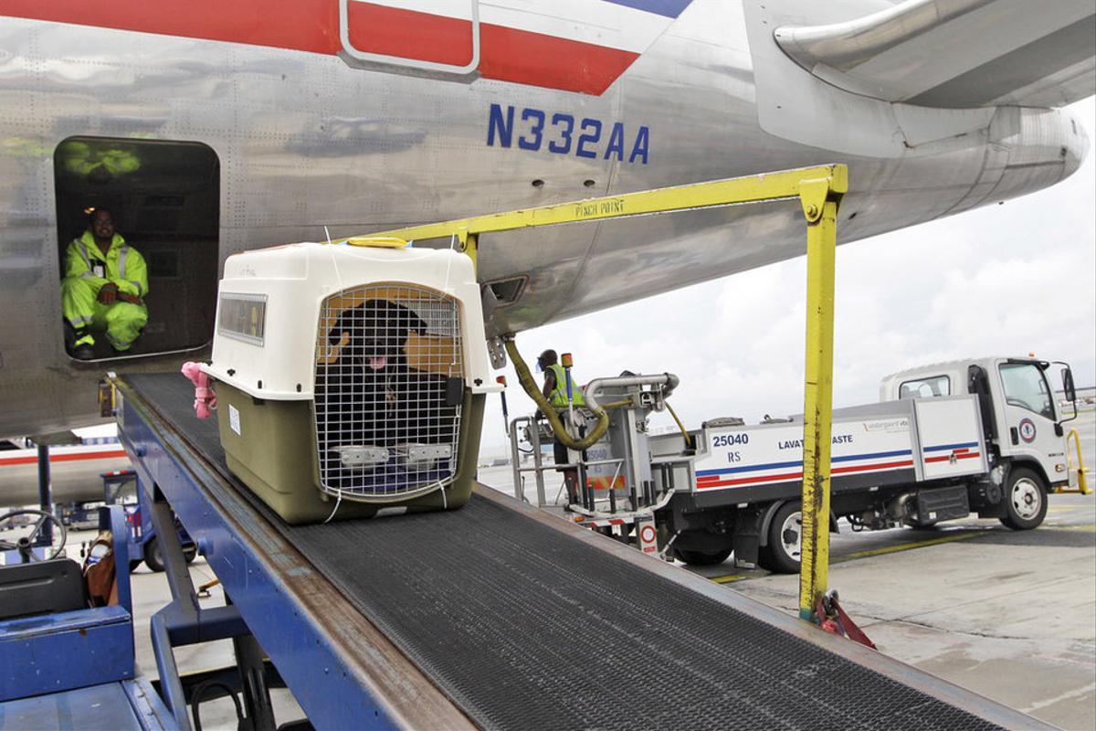Переноска с собакой грузится на борт самолета